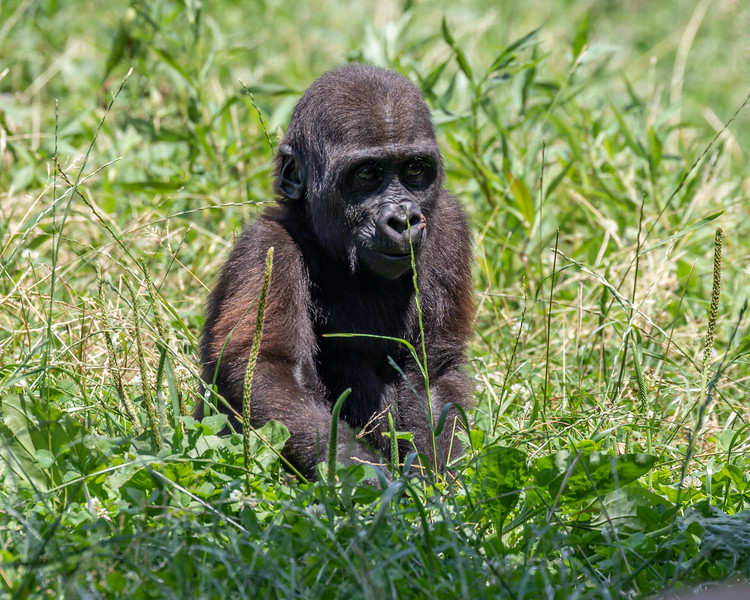 Pittsburgh Zoo-7284.jpg