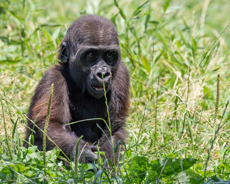 Pittsburgh Zoo-7279.jpg