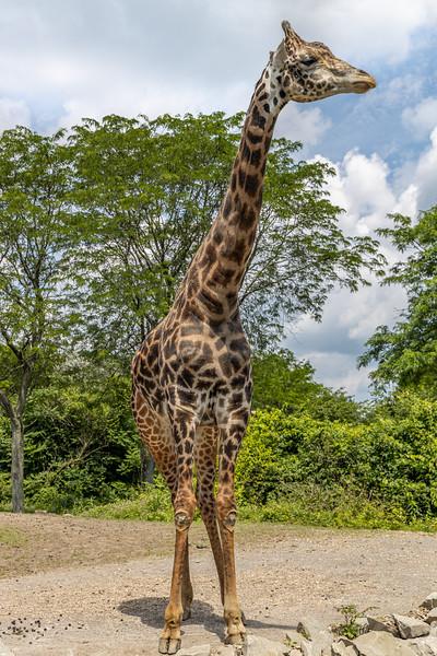 Pittsburgh Zoo-7106.jpg