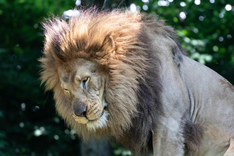 Pittsburgh Zoo-7127.jpg