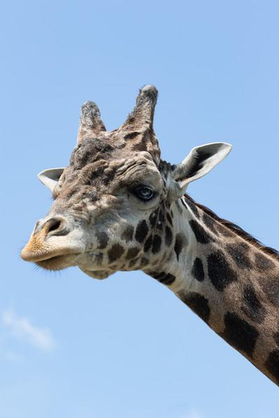 Pittsburgh Zoo-7250.jpg