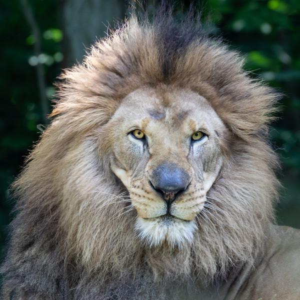 Pittsburgh Zoo-.jpg