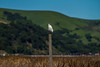 Project 366 - Day 101<br /> Another Snowy Egret.