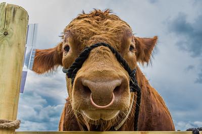 Totnes Agricultural Show