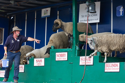 The Sheep Show, Totnes Agricultural Show