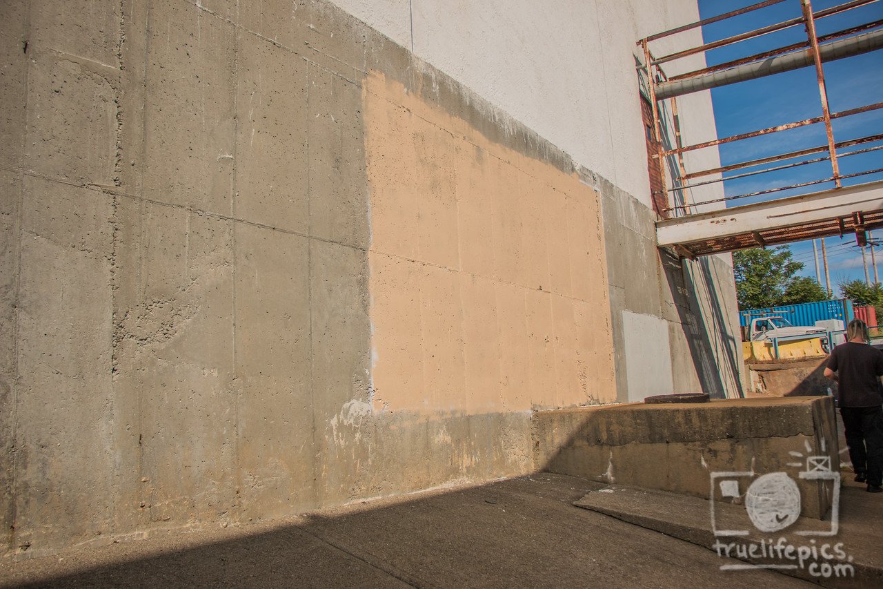 September 9, 2016 start of murals, newborn bunnies litter 2, & scaffolding (4)