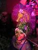 Krewe De Kinque Bal De Masques IX 2-18-12 728