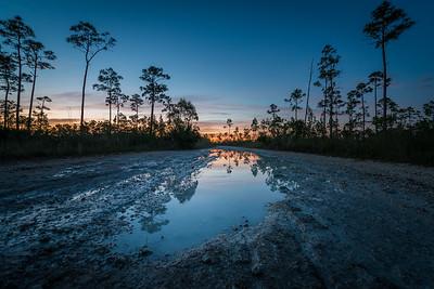 Everglades Puddles