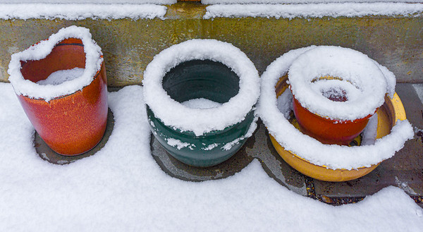 Snow-Covered Pots in Truck, Portland, 2018