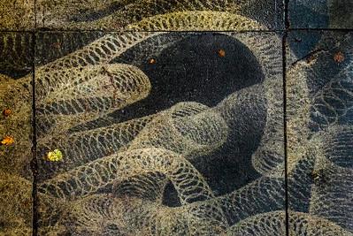 Mysterious Patterns on Sidewalk, Portland, 2017