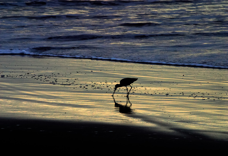 shorebird-A3