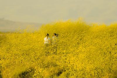 girls in mustard-8324-2