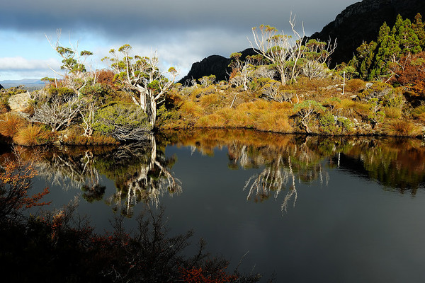 Pencil Pine Sentinels - Lake Hanson in Cradle Mountain National Park, Tasmania, Australia. This photo reached the finals in the ANZANG 2010 photographic competition.