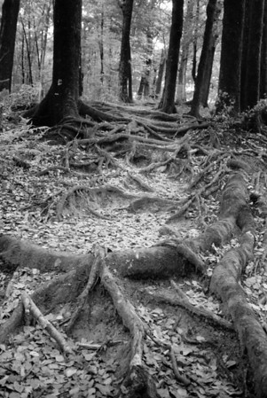 Intertwined - Queen Charlotte Track, New Zealand South Island.