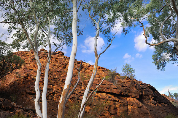Thirsty Gums - Mutawintji National Park, NSW