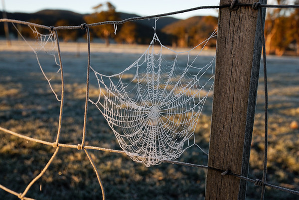 Frosty Weaving - Tasmania. Just outside the Pub in a Paddock.
