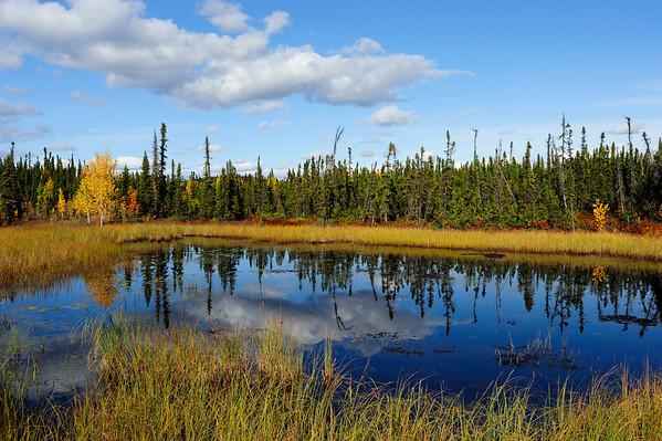 Opposites - Odd one out, Kluane NP, Yukon Canada.