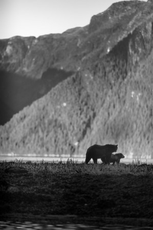 Going Home - Mother and cub heading to the forest.