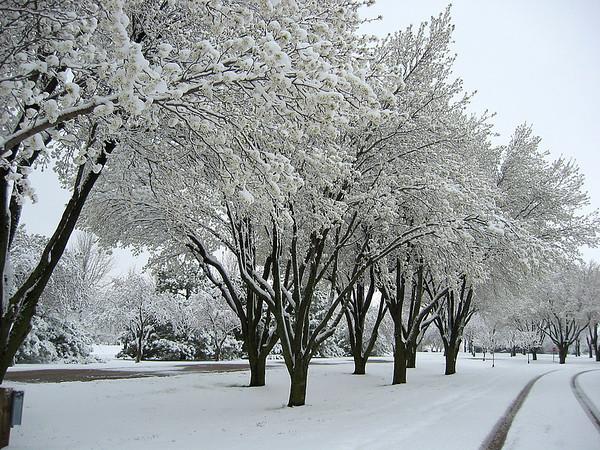 Winter Scene (1)