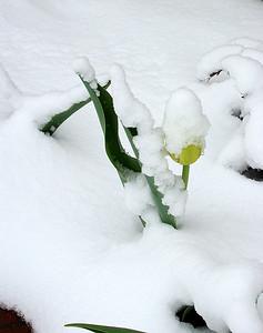 Winter Scene (3)