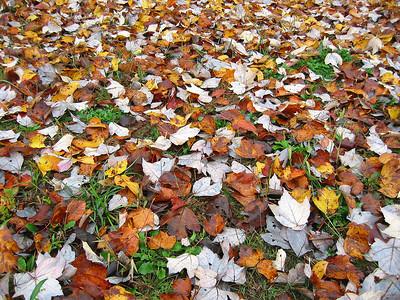 Autumn Scene (2)
