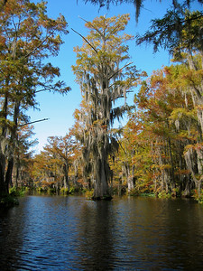 Autumn in Central Louisiana