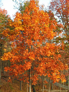 Autumn in Eastern Tennessee (1)