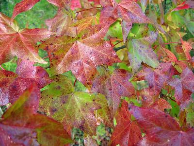 Autumn Scene (1)