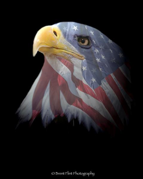 DF.283 - bald eagle/flag digital composite