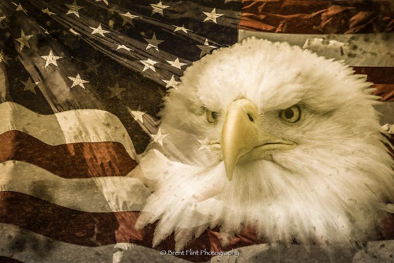 DF.4003 - eagle and US flag composite