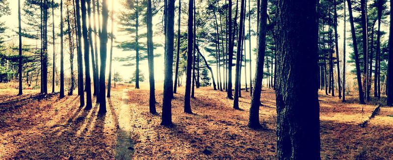 Park Point Trees