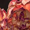 Rose # 1