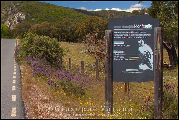 Monfrague National Park - Spain  Giuseppe Varano - Nature and Wildlife Images - Birds and Nature Photography