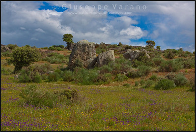 The steppe  Extremadura - Spain  Giuseppe Varano - Nature and Wildlife Images - Birds and Nature Photography