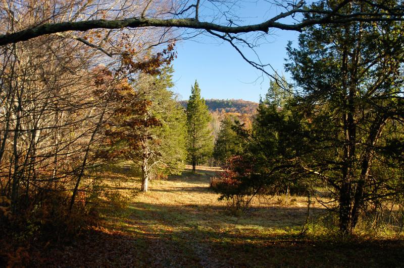 Sycamore Meadow
