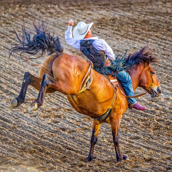 """Bronc rider"", Gunnison , Colorado"