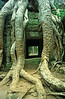 Time / The temple of Ta Prohm covered in the roots of a massive Banyan tree. Bullet holes in the roots beside the entrance bear solemn witness to Cambodia's tragic history. / Ta Prohm, Angkor, Cambodia
