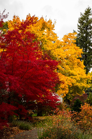 Fall Colors ~ Coeur d'Alene, Idaho