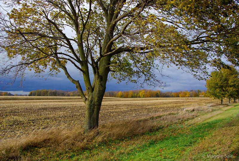 Corn stubble field near St. Jacobs