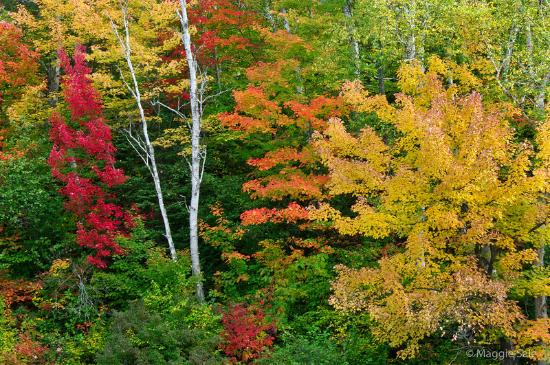 Colours in Chutes Provincial Park