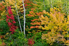 Colours in Chutes Provincial Park