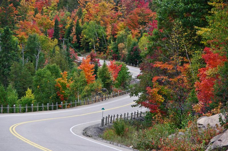 Bend on Highway 60, Algonquin Park