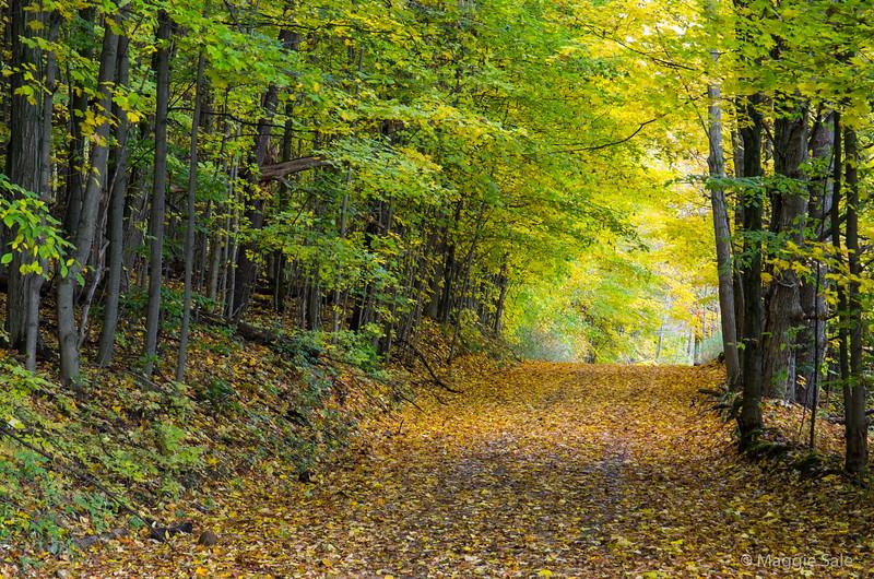 Country road on Niagara Escarpment south of Collingwood