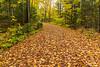 Limberlost trail