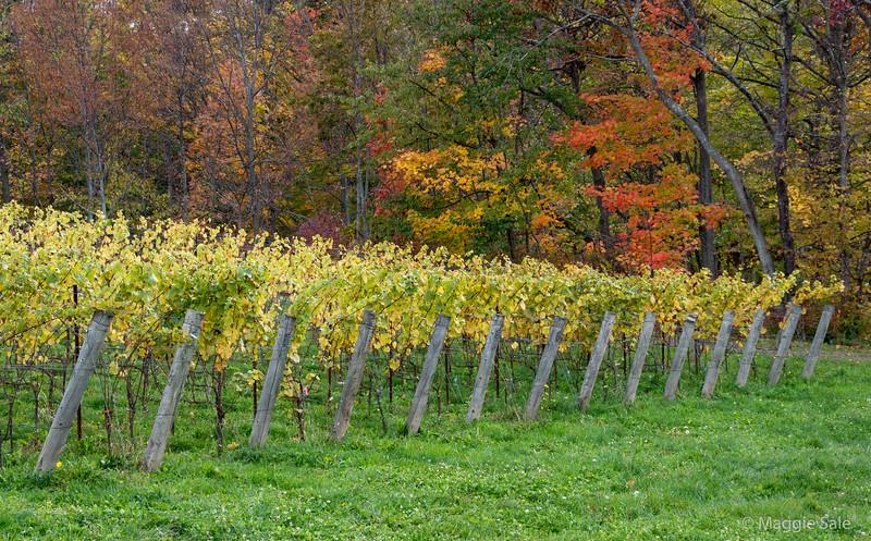 Hidden Bench winery, Niagara Region