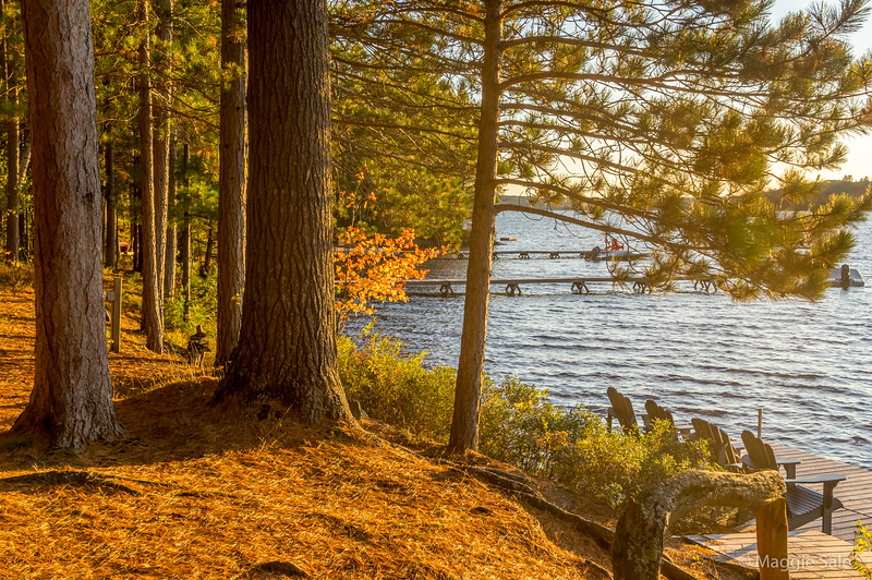 Lake of Bays shoreline at Dwight