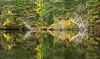 Oxtongue River reflections