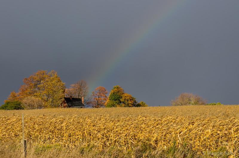 Rainbow over farmhouse near Palgrave