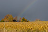 Rainbow over farmhouse near Palgrave
