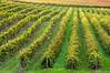 Mike Weir winery, Niagara Region